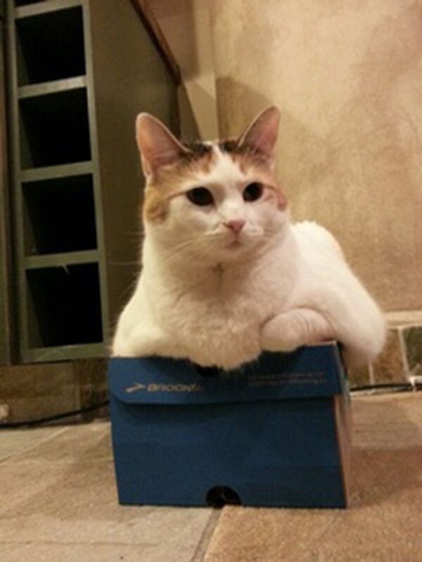 if i fits i sits cat in a box 399 If I Fits I Sits: 500 Cats in a Box MEGA Compilation Page 4
