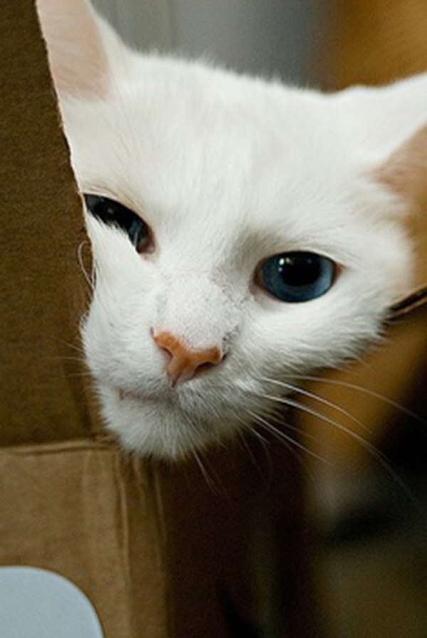 if i fits i sits cat in a box 375 If I Fits I Sits: 500 Cats in a Box MEGA Compilation Page 4