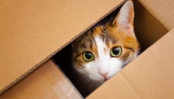 if i fits i sits cat in a box 316 If I Fits I Sits: 500 Cats in a Box MEGA Compilation Page 4