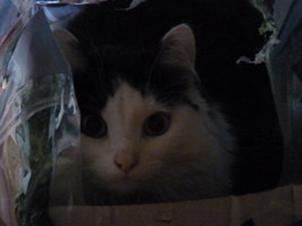 if i fits i sits cat in a box 329 If I Fits I Sits: 500 Cats in a Box MEGA Compilation Page 4