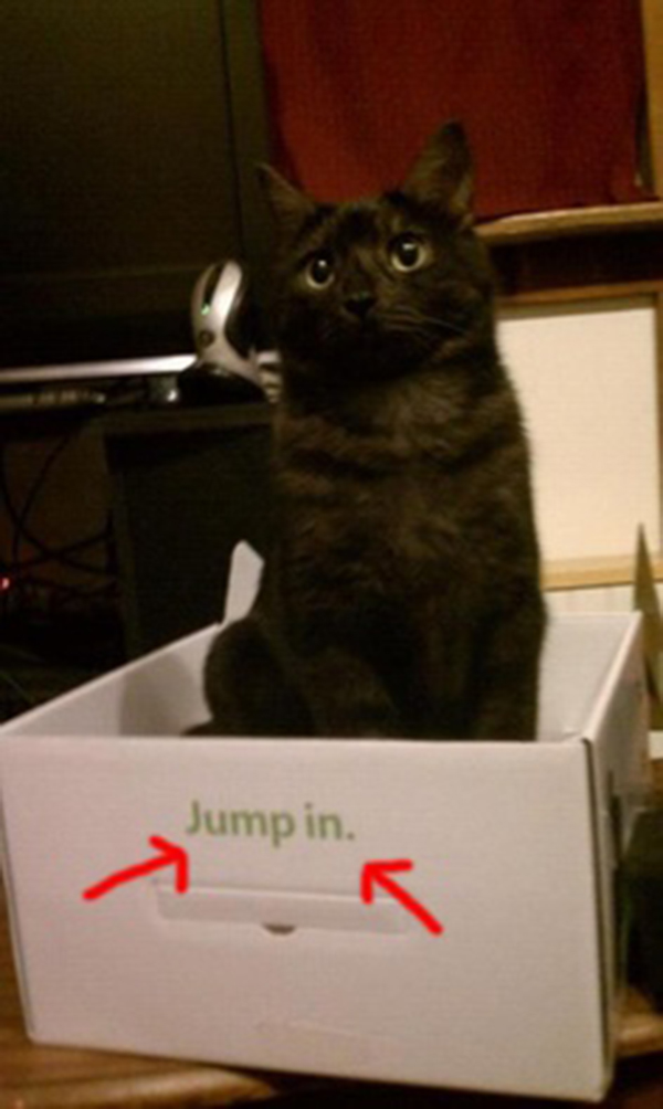 if i fits i sits cat in a box 381 If I Fits I Sits: 500 Cats in a Box MEGA Compilation Page 4
