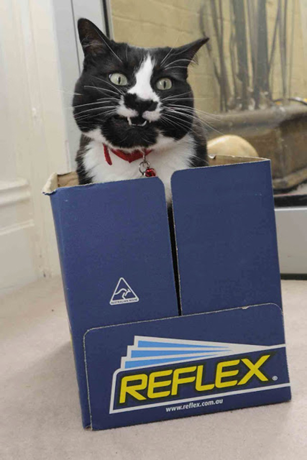 if i fits i sits cat in a box 489 If I Fits I Sits: 500 Cats in a Box MEGA Compilation Page 5
