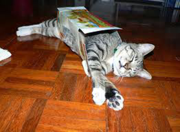 if i fits i sits cat in a box 368 If I Fits I Sits: 500 Cats in a Box MEGA Compilation Page 4