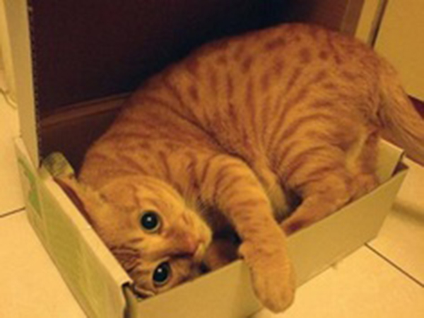 if i fits i sits cat in a box 480 If I Fits I Sits: 500 Cats in a Box MEGA Compilation Page 5