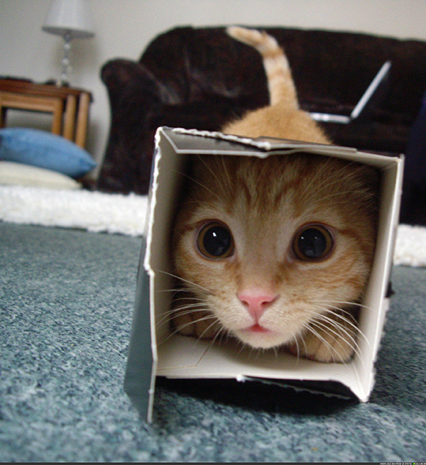 if i fits i sits cat in a box 361 If I Fits I Sits: 500 Cats in a Box MEGA Compilation Page 4