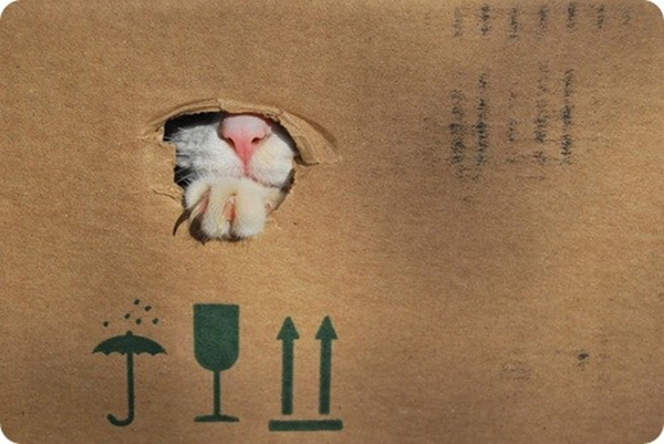 if i fits i sits cat in a box 469 If I Fits I Sits: 500 Cats in a Box MEGA Compilation Page 5