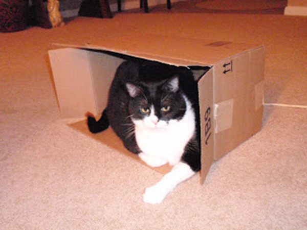 if i fits i sits cat in a box 366 If I Fits I Sits: 500 Cats in a Box MEGA Compilation Page 4