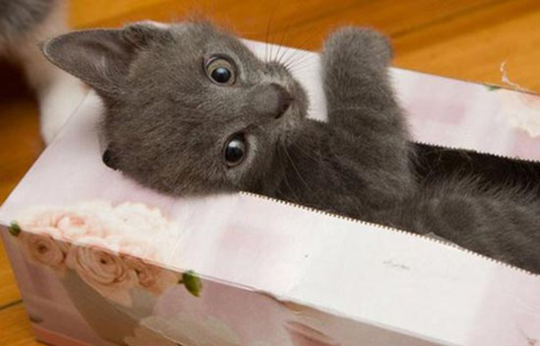 if i fits i sits cat in a box 345 If I Fits I Sits: 500 Cats in a Box MEGA Compilation Page 4