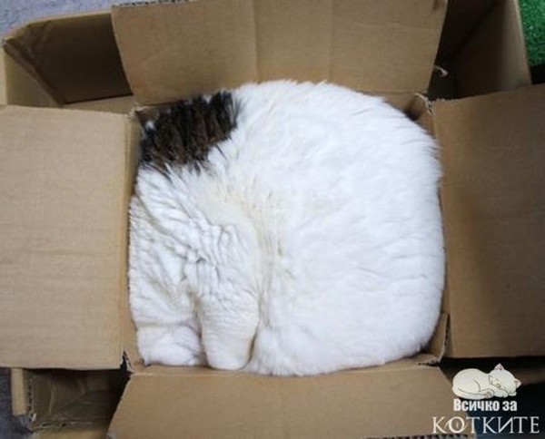 if i fits i sits cat in a box 376 If I Fits I Sits: 500 Cats in a Box MEGA Compilation Page 4
