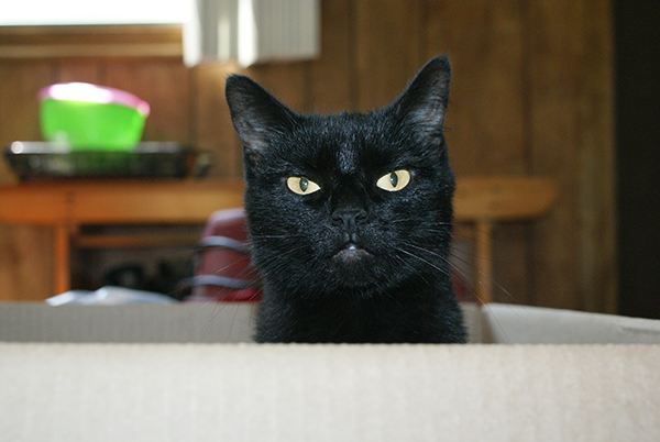 if i fits i sits cat in a box 355 If I Fits I Sits: 500 Cats in a Box MEGA Compilation Page 4