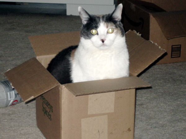 if i fits i sits cat in a box 313 If I Fits I Sits: 500 Cats in a Box MEGA Compilation Page 4