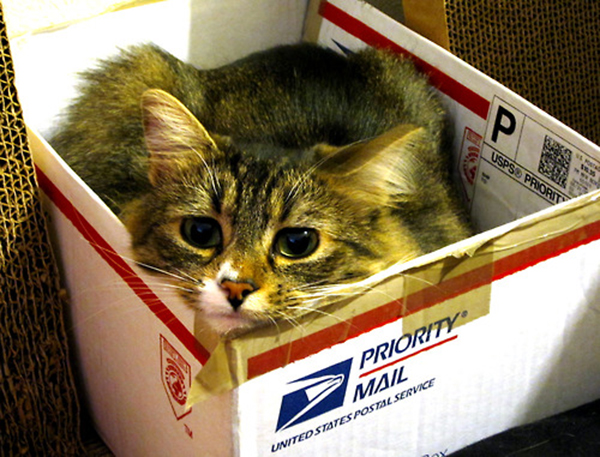 if i fits i sits cat in a box 398 If I Fits I Sits: 500 Cats in a Box MEGA Compilation Page 4
