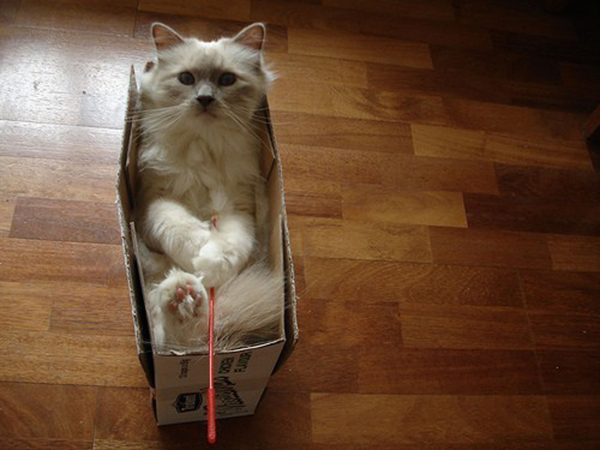 if i fits i sits cat in a box 352 If I Fits I Sits: 500 Cats in a Box MEGA Compilation Page 4