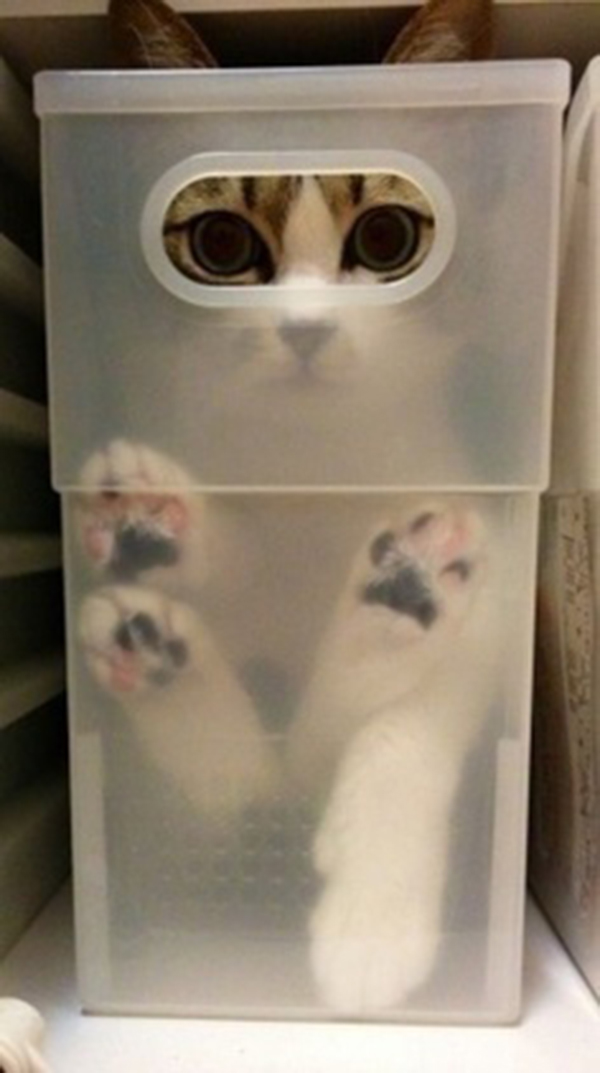 if i fits i sits cat in a box 378 If I Fits I Sits: 500 Cats in a Box MEGA Compilation Page 4