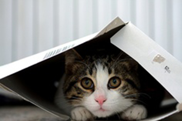 if i fits i sits cat in a box 391 If I Fits I Sits: 500 Cats in a Box MEGA Compilation Page 4