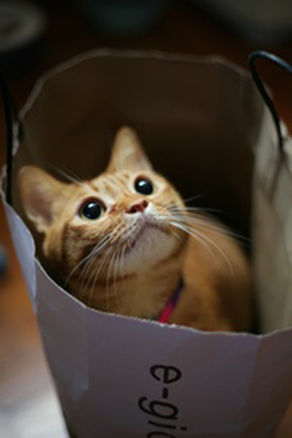 if i fits i sits cat in a box 339 If I Fits I Sits: 500 Cats in a Box MEGA Compilation Page 4