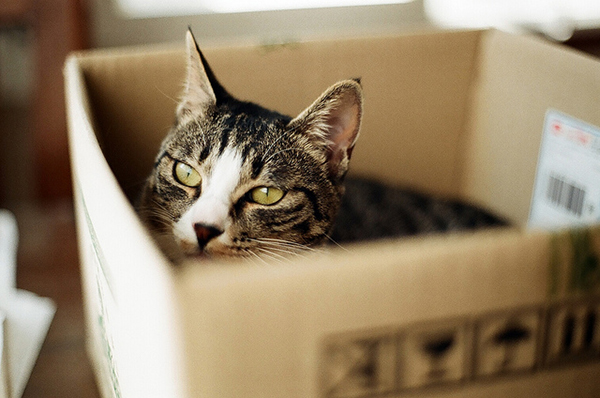 if i fits i sits cat in a box 396 If I Fits I Sits: 500 Cats in a Box MEGA Compilation Page 4