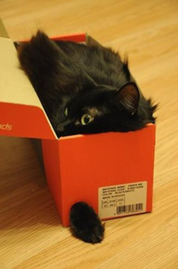 if i fits i sits cat in a box 481 If I Fits I Sits: 500 Cats in a Box MEGA Compilation Page 5