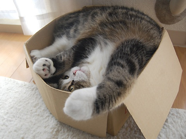 if i fits i sits cat in a box 343 If I Fits I Sits: 500 Cats in a Box MEGA Compilation Page 4