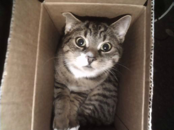 if i fits i sits cat in a box 344 If I Fits I Sits: 500 Cats in a Box MEGA Compilation Page 4