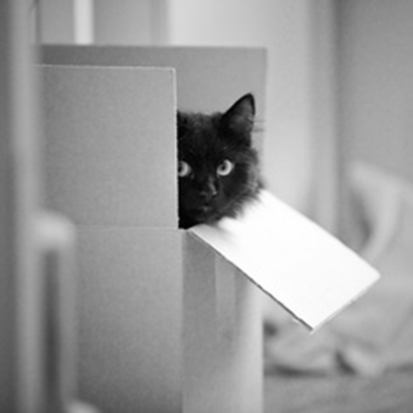 if i fits i sits cat in a box 486 If I Fits I Sits: 500 Cats in a Box MEGA Compilation Page 5
