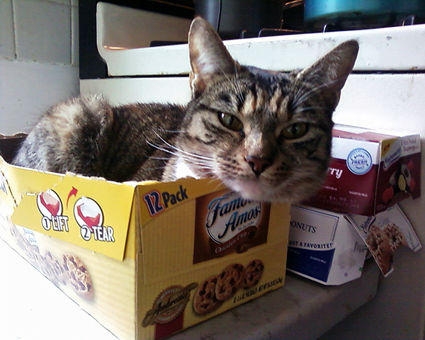 if i fits i sits cat in a box 367 If I Fits I Sits: 500 Cats in a Box MEGA Compilation Page 4