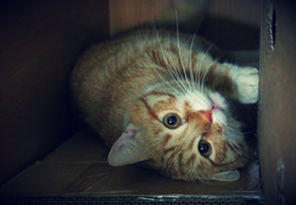 if i fits i sits cat in a box 328 If I Fits I Sits: 500 Cats in a Box MEGA Compilation Page 4