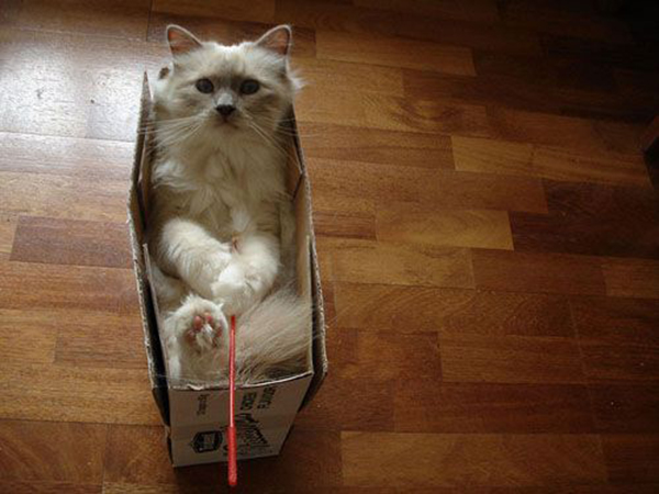 if i fits i sits cat in a box 387 If I Fits I Sits: 500 Cats in a Box MEGA Compilation Page 4