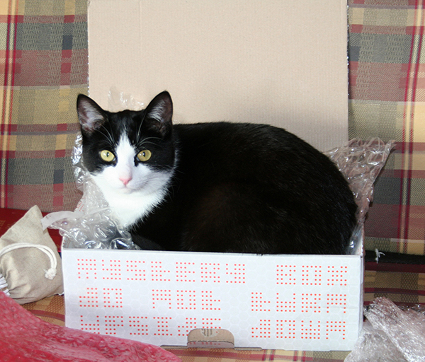 if i fits i sits cat in a box 466 If I Fits I Sits: 500 Cats in a Box MEGA Compilation Page 5