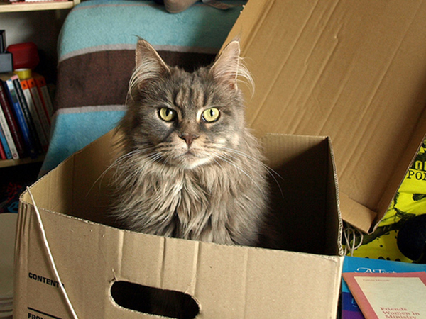 if i fits i sits cat in a box 369 If I Fits I Sits: 500 Cats in a Box MEGA Compilation Page 4
