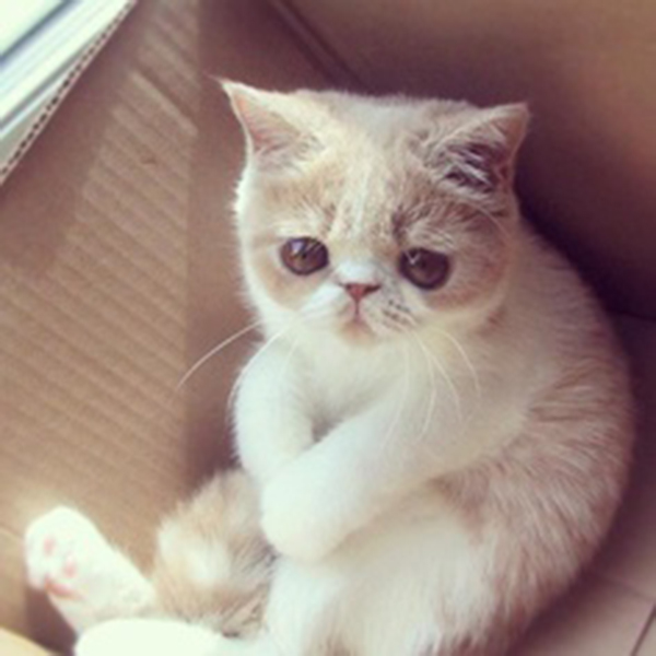 if i fits i sits cat in a box 488 If I Fits I Sits: 500 Cats in a Box MEGA Compilation Page 5