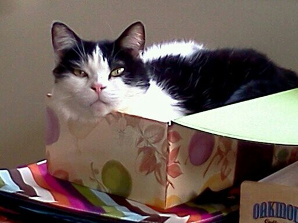if i fits i sits cat in a box 461 If I Fits I Sits: 500 Cats in a Box MEGA Compilation Page 5