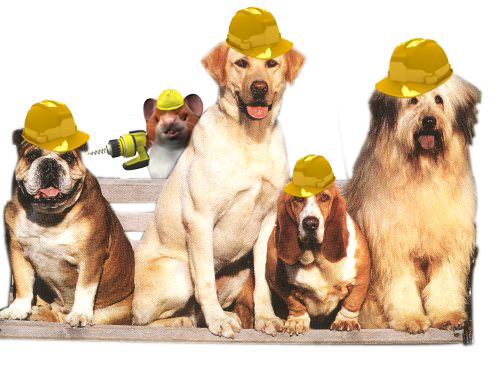 hard_hat_dogs