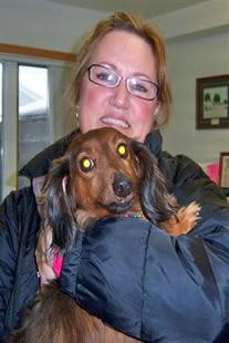 kit dachshund