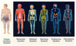 Various Bodily Systems