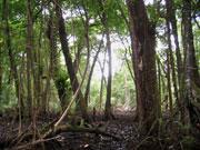 Yela Forest Edge