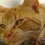 kotki 8 150x150 Zdjęcia kotów