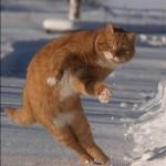 kotki 9 150x150 Zdjęcia kotów