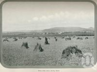 """<span class=""""caption-caption"""">Wheat field at Allora</span>. <br />From <span class=""""caption-book"""">Australia Unlimited</span>, <span class=""""caption-creator"""">Edwin J Brady</span>, <span class=""""caption-publisher"""">George Robertson & Co</span>, Melbourne, 1918, collection of <span class=""""caption-contributor"""">Centre for the Government of Queensland</span>."""
