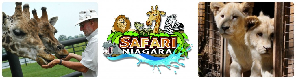 safari niagara Collage
