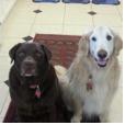 Cooper & Buddy