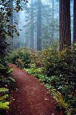Redwood National Park / Wild Coast / Northern California