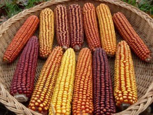 Open Oak Party Mix Corn