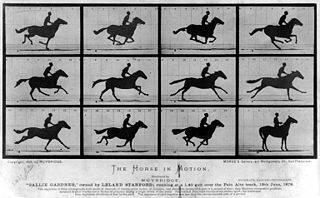 "The Horse in Motion by Eadweard Muybridge. ""Sallie Gardner,"" owned by Leland Stanford; running at a 1:40 gait over the Palo Alto track, 19th June 1878"
