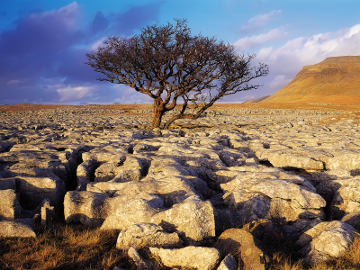 desert_rock_and_tree_wall_inkbluesky-9ffcc.png