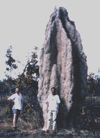 Nasutitermes triodiae mound Kakadu, 6 metres plus. Don on left.