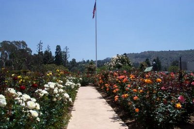The Rose Hills Pageant of Roses Garden picture 2