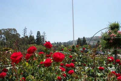 The Rose Hills Pageant of Roses Garden