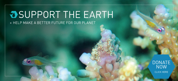 Support The Earth and Help Make a Better Future for our Planet