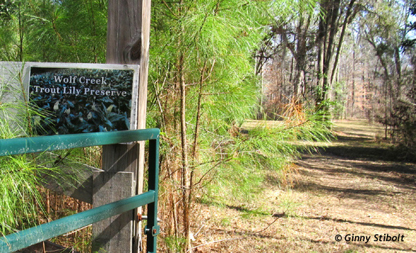 The Wolf Creek Trout Lily Preserve--140 acres which was saved from development.